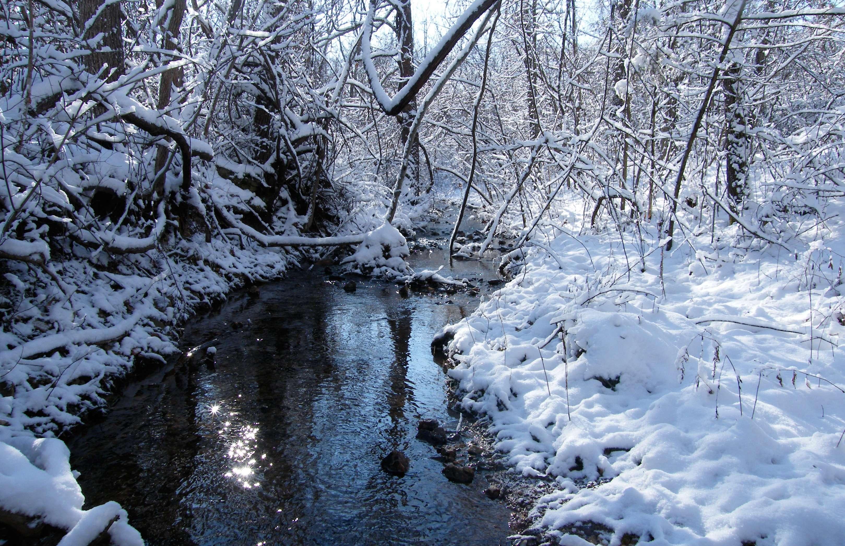 Woodland Stream in Winter