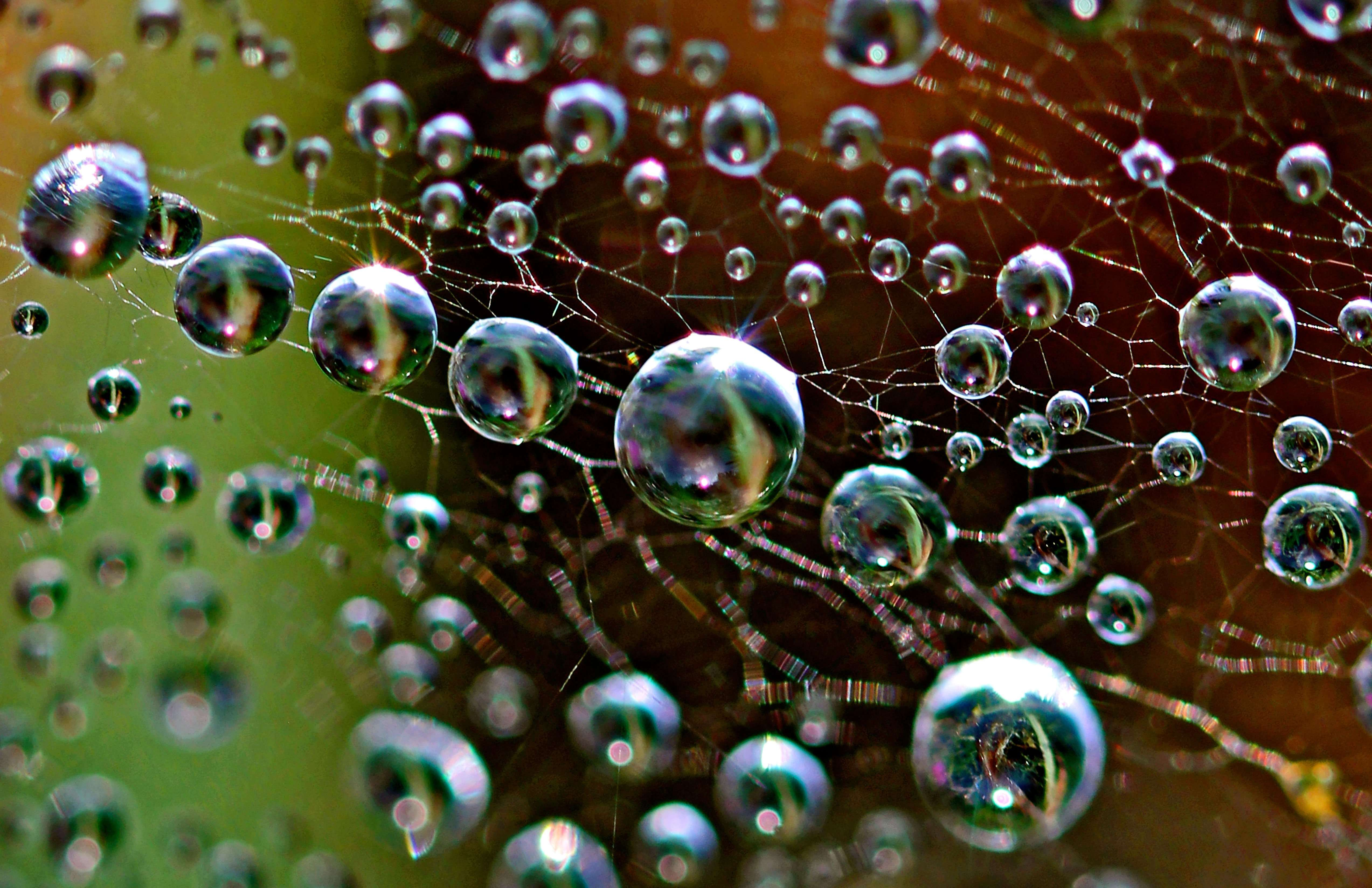 Another Galaxy - Dew on Bowl & Doily Spider web