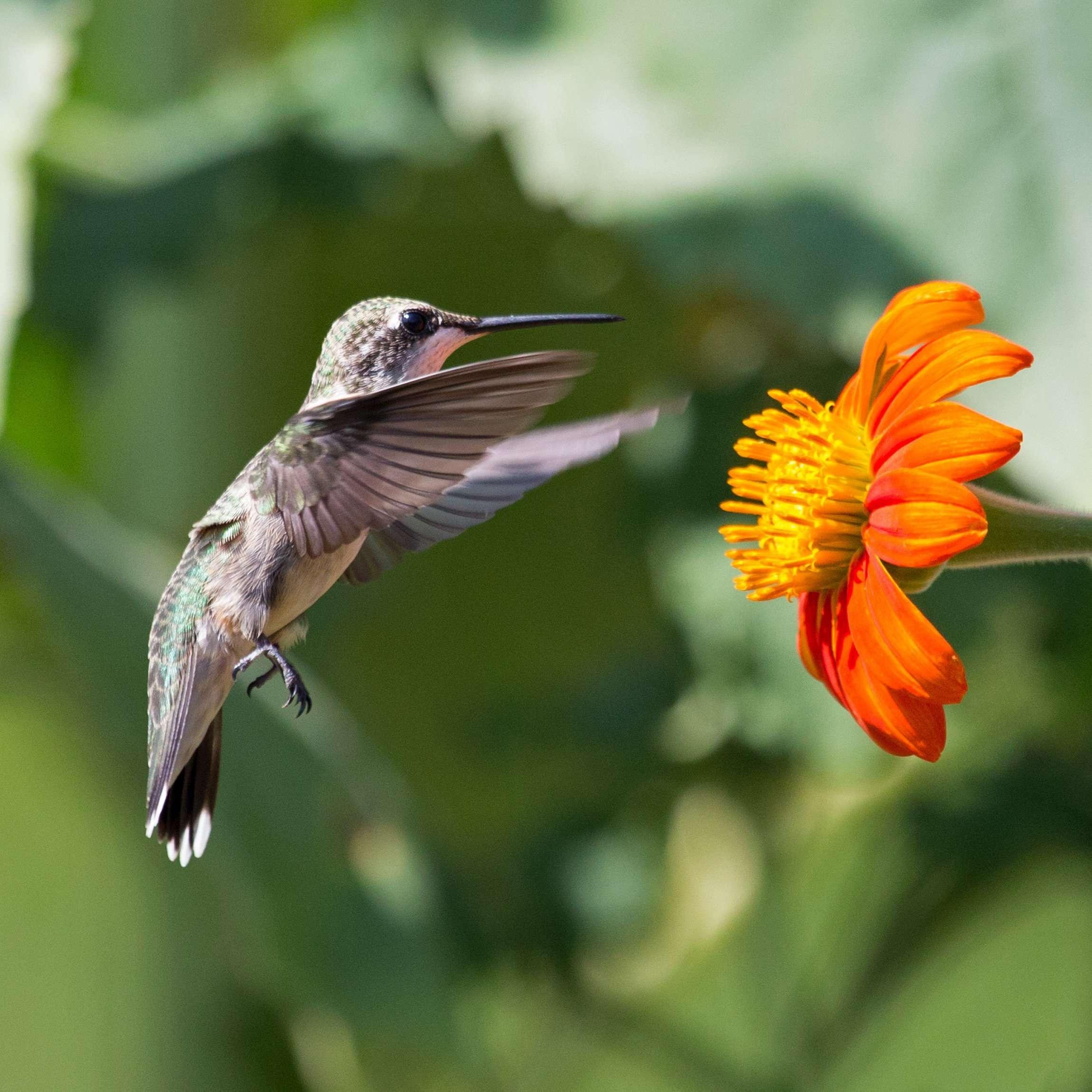 Treading Air for Nectar