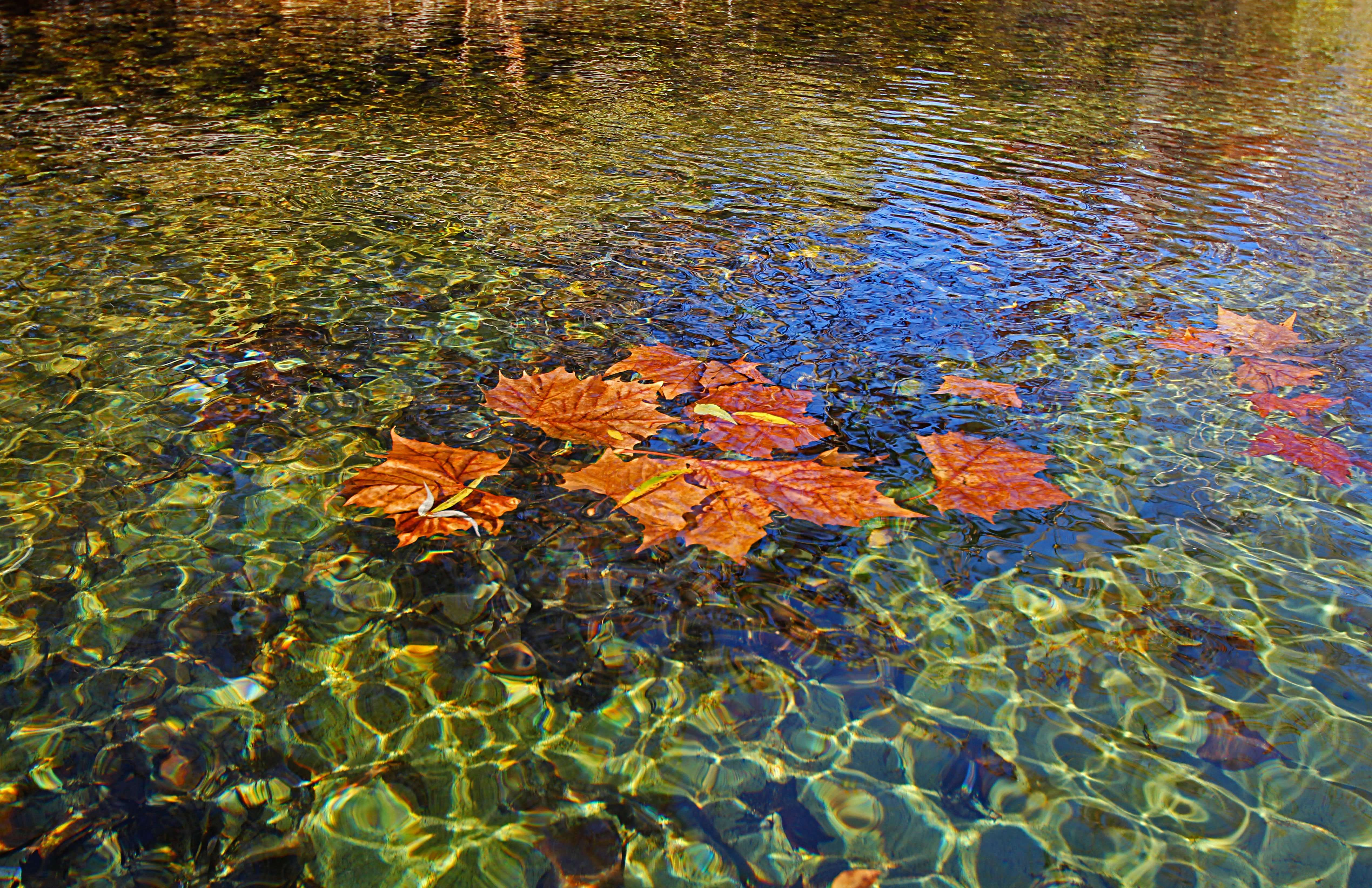 Leaves on Water - Note Card in Ozark Streams Box Set
