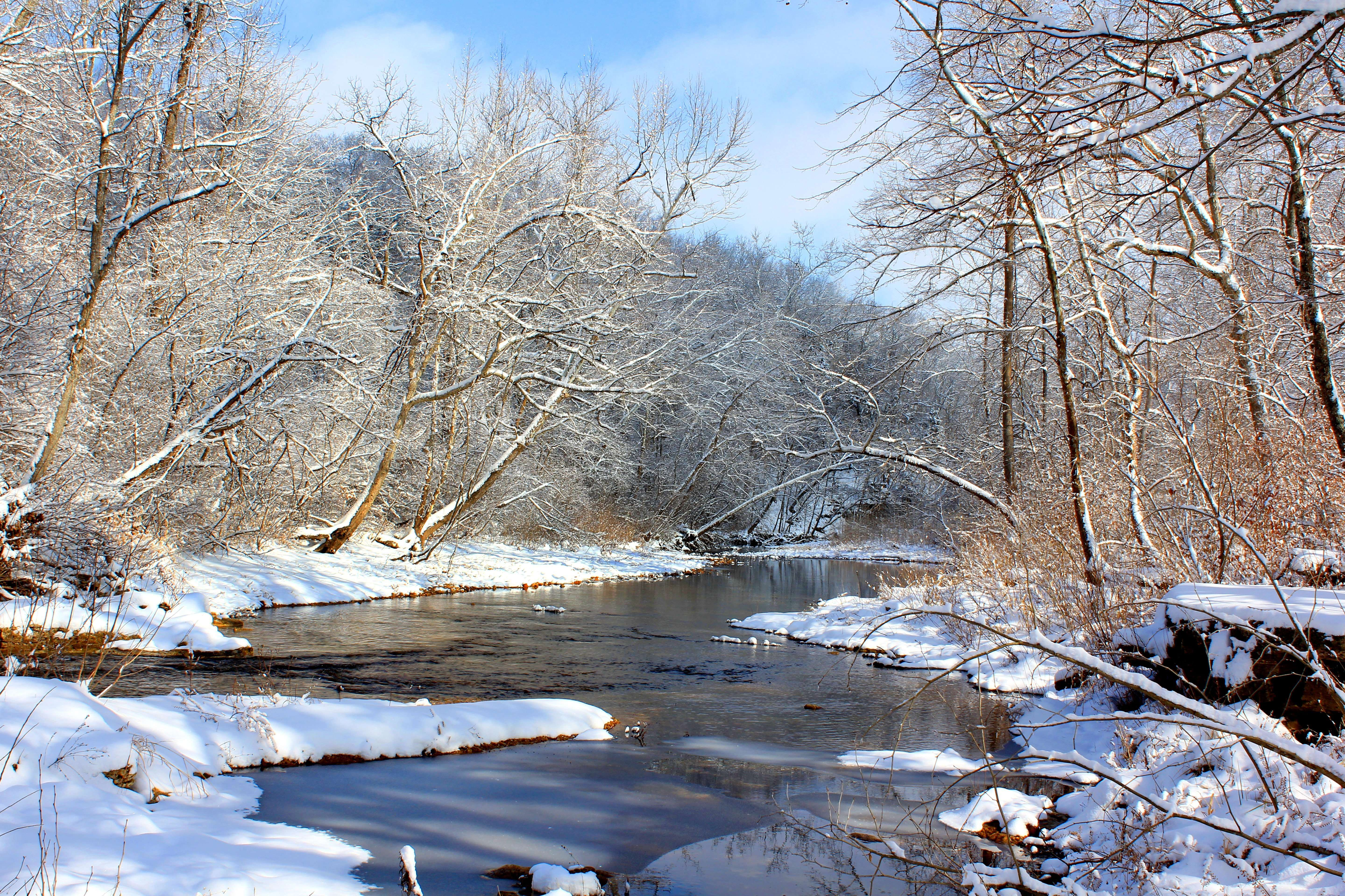 Snow Laden Ozark Stream