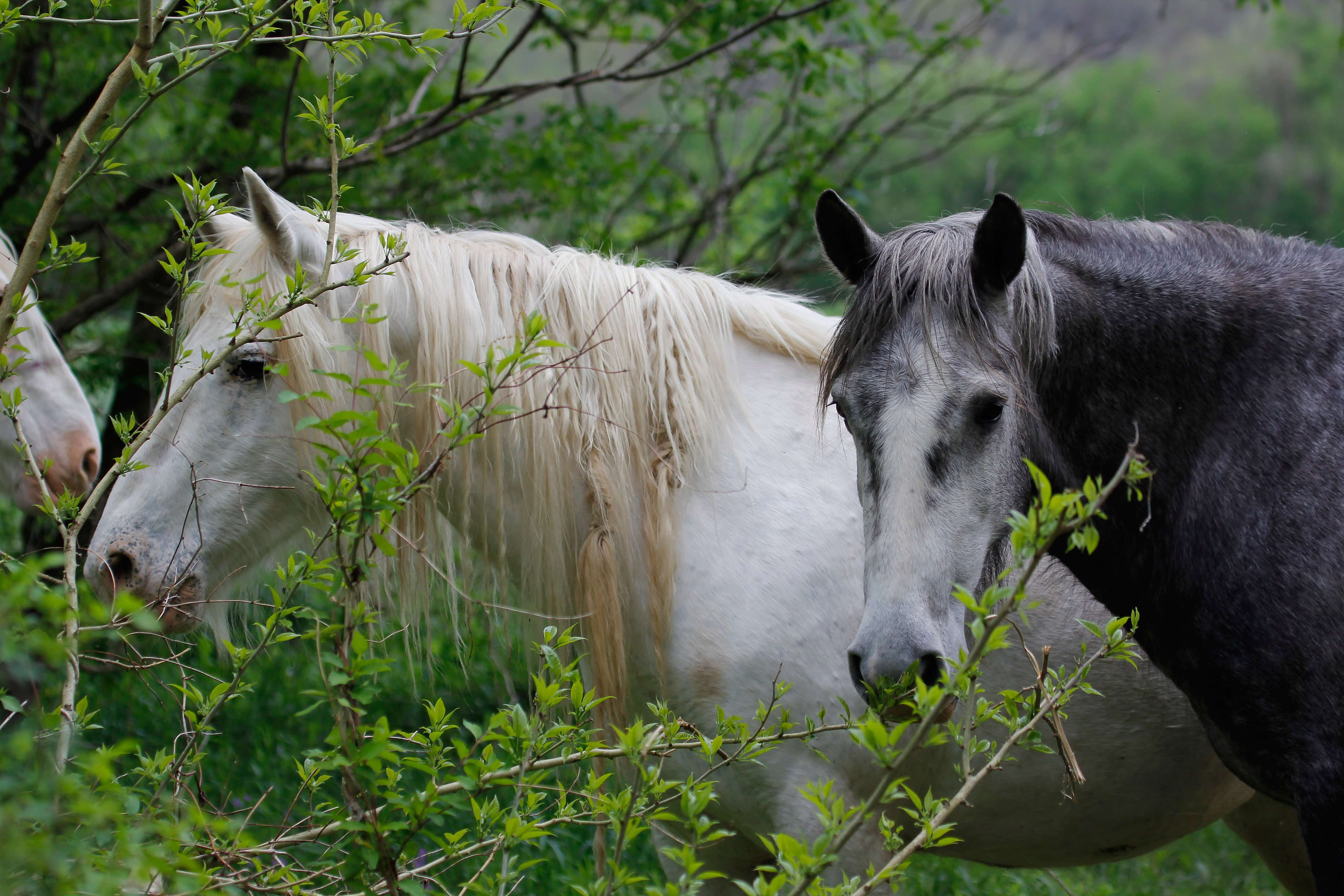 Wild Horse Friends
