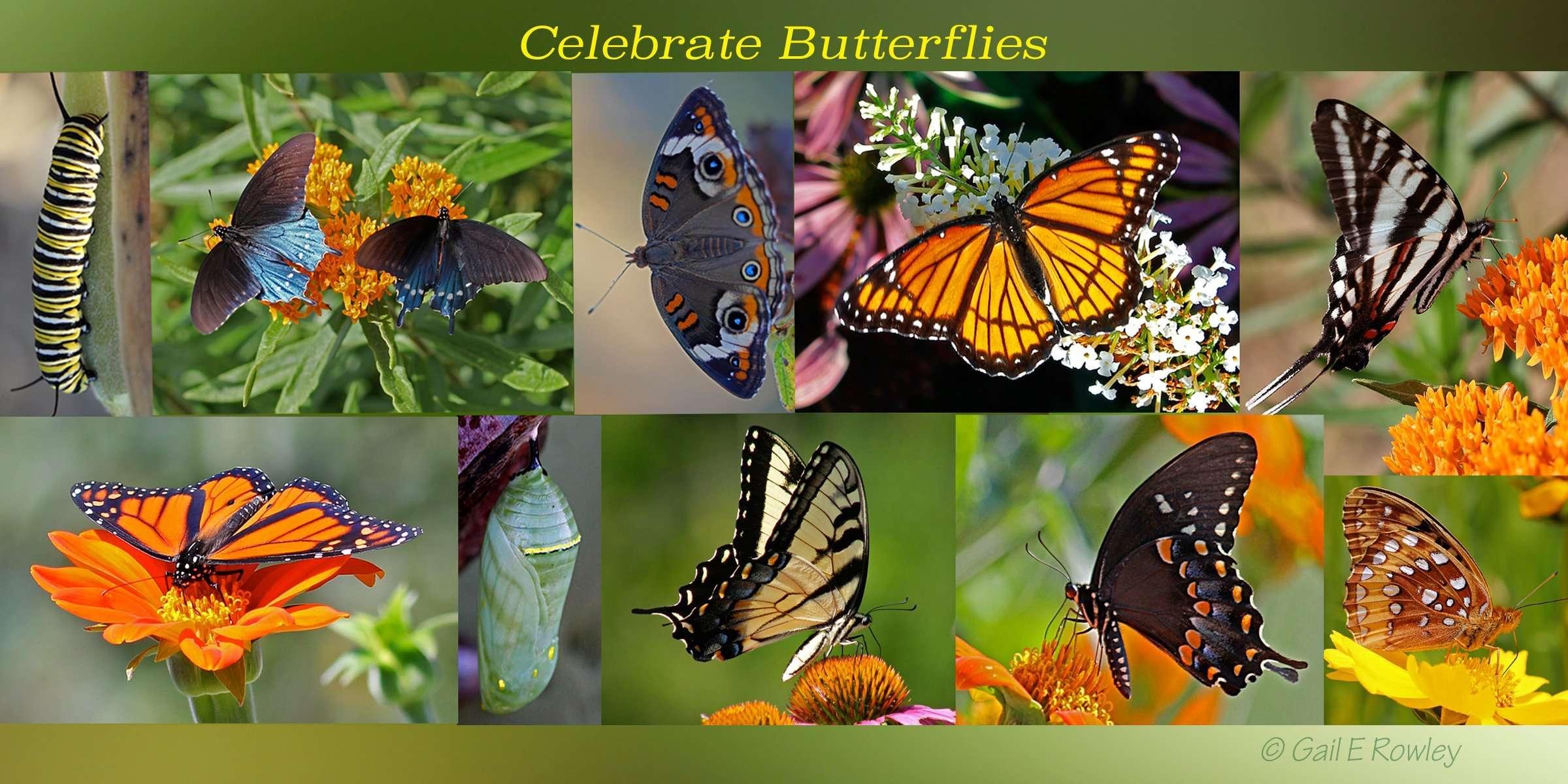 Celebrate Butterflies!