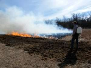 Controlled Burn Helps Natives by ozark stream photography