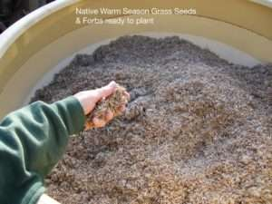 Native Warm Season Grasses and Forb Seeds read by plant photo by Gail E Rowley Ozark Stream Photography