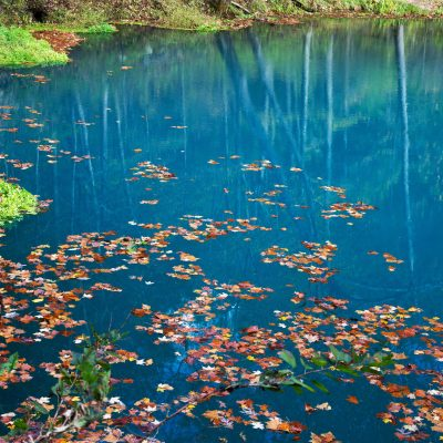 October Day on Alley Spring with autumn leaves floating - deep aquamarine
